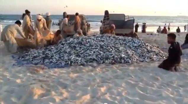 Salalah pescatori - gennaio 2013